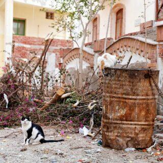There are a lot of stray cats in Hurghada. And I love every single one of them! ⠀⠀⠀⠀⠀⠀⠀⠀⠀ . . . . . #hippomag # oksfieldmag #lekkerzine #verybusymagazine #noicemag #myfeatureshoot #aintbadmagazine # burnmagazine #gominimalmagazine #ifyouleave #phornography #onbooooooom #aperturefoundation #oftheafternoon #solarcollective #yetmagazine #subjectivelyobjective #anotherescape #visualvoicemag #somewheremagazine #paperjournalmag #ourmag #expomag #palepalmcollection #summersunselection #rentalmag #imaginarymagnitude #rundownmagazine #mytinyatlas #freshairclub #anotherescape #thisaintartschool